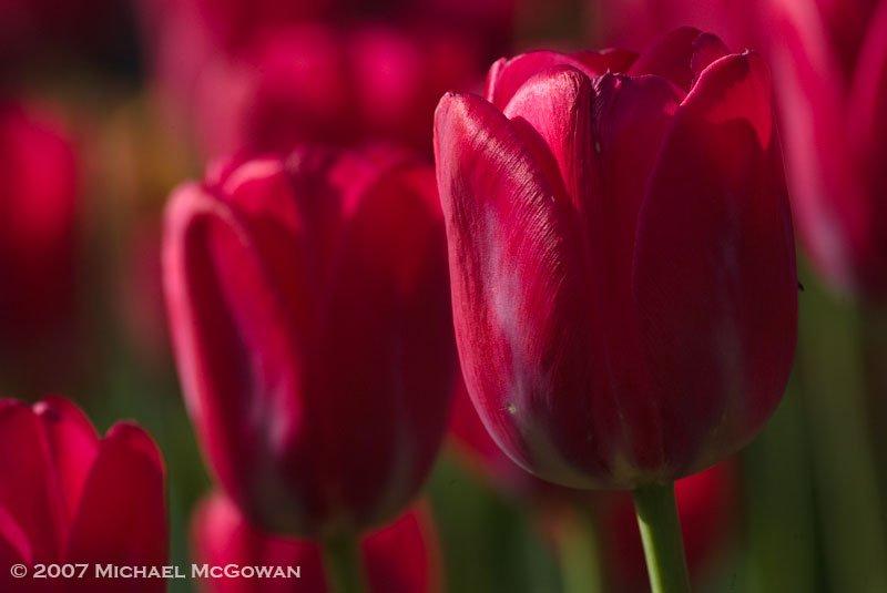 Sunset flowers Michael McGowan by Michael McGowan