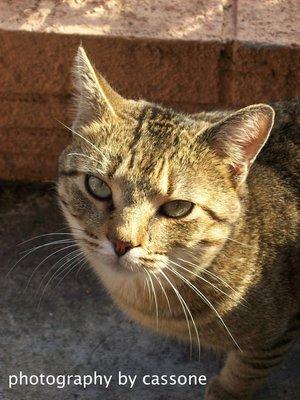 Cat (February 2008) photo by Antonio Cassone by Antonio Cassone