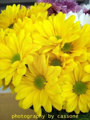 Ahhh, Yellow! photo by Antonio Cassone by Antonio Cassone