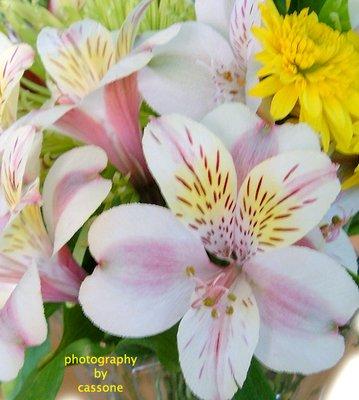 Flowers photo by Antonio Cassone by Antonio Cassone