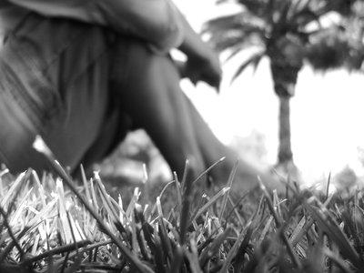 Grasshopper's Eye  by Daniel Joseph Rivas