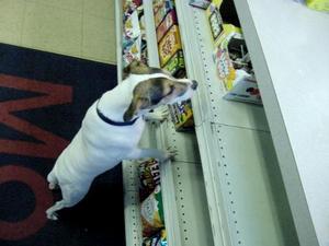Chewy Shopping -  (2003 www.chewydog.com)
