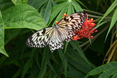Butterfly MEP 2008 by Okwuchi Duru-Jones
