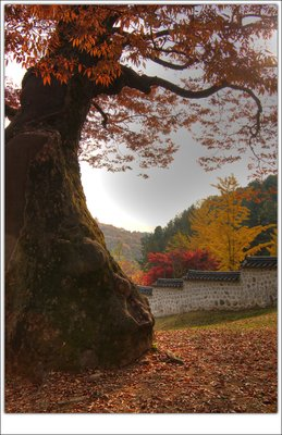 an old tree(2) -  ()