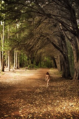 A Walk under the Tall Ones Art Nude model walking in Olinda Forest, Maui HI
