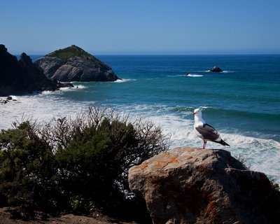 Friendly Seagull My friend wouldn't leave, as I shot several Pacific Ocean images.