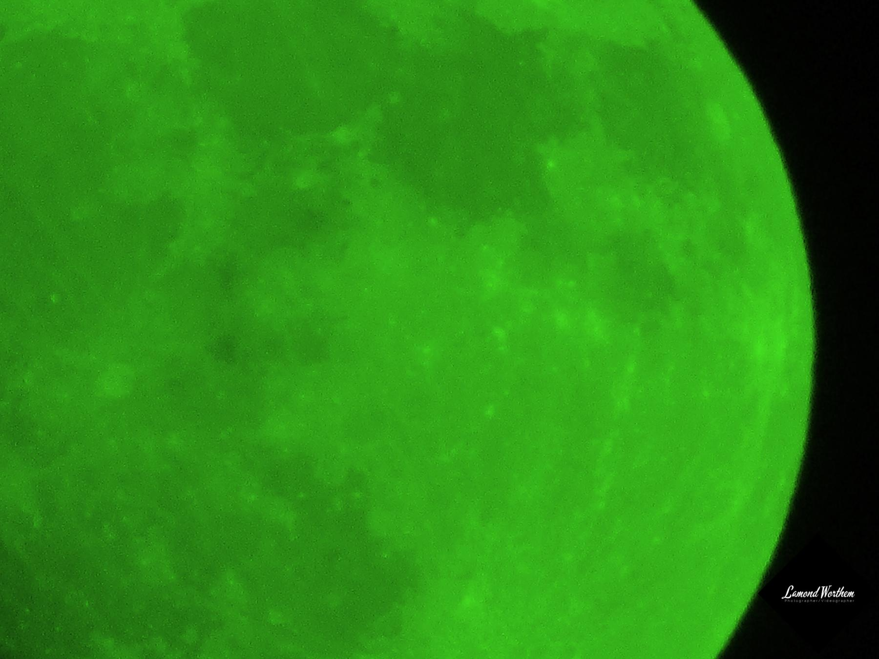 Colorizing The Moon Green Instead of it growing on trees, it would just shower down with money.