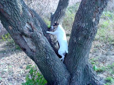 Chewy climbs tree submitted to a calendar for dog food